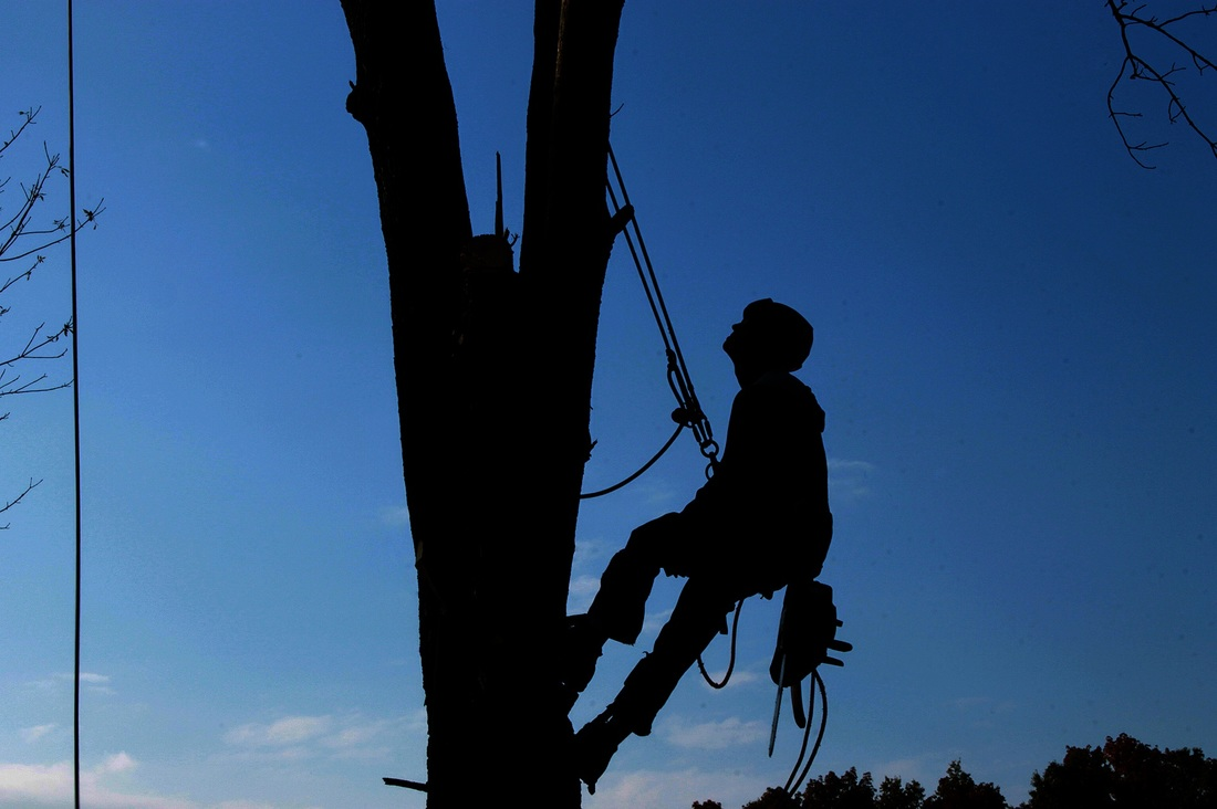 tree contractor fort smith ar