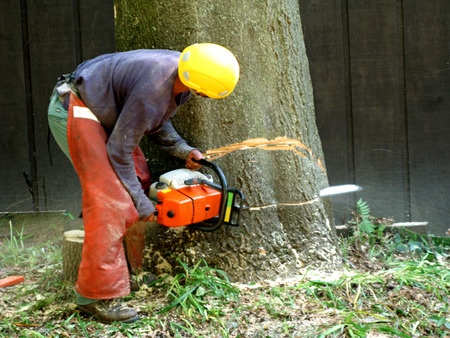 Fort Smith Tree Cutting